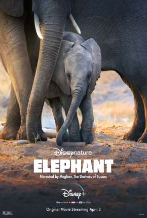 Elefante - Legendado Filme Torrent Download